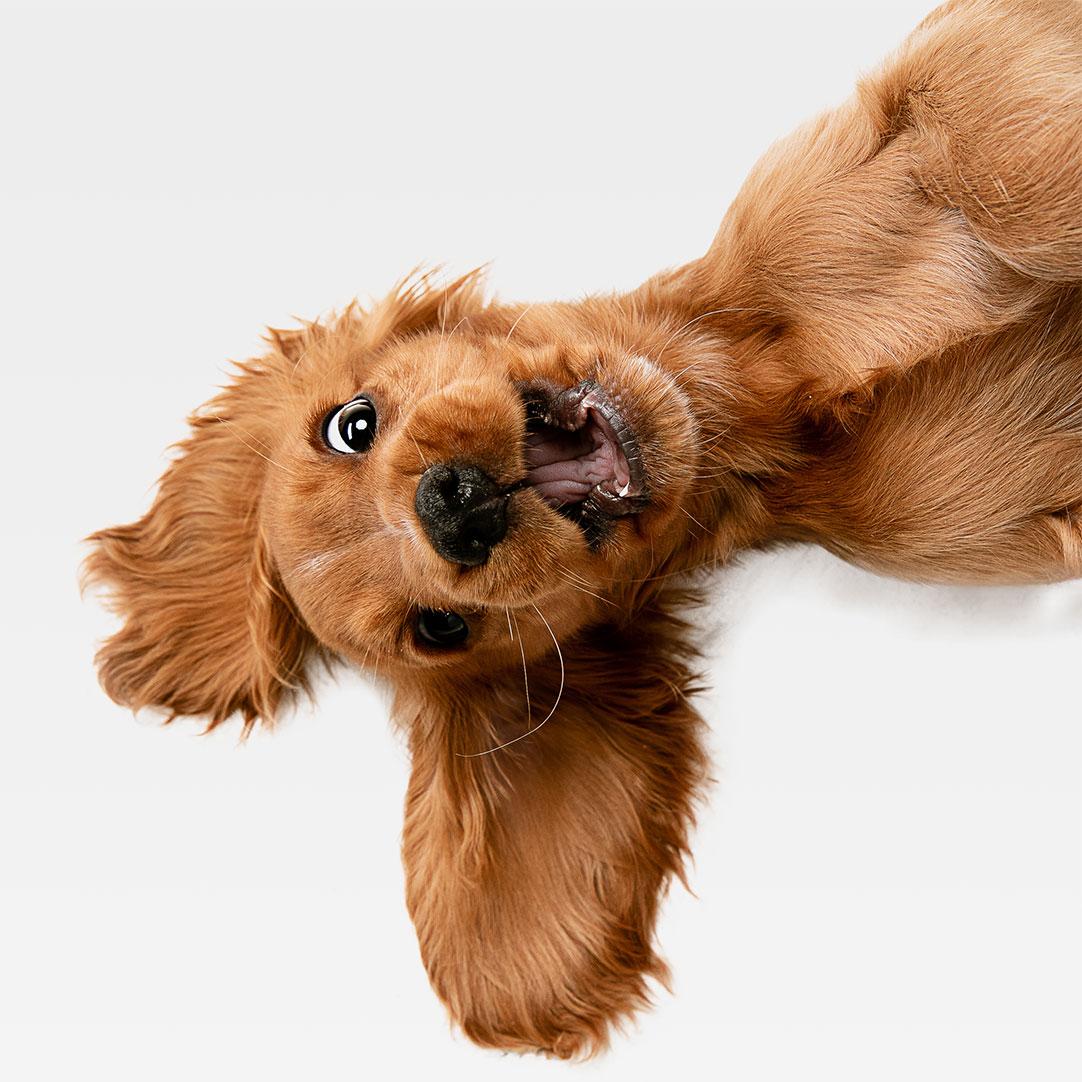 Honden Service Over Betuwe