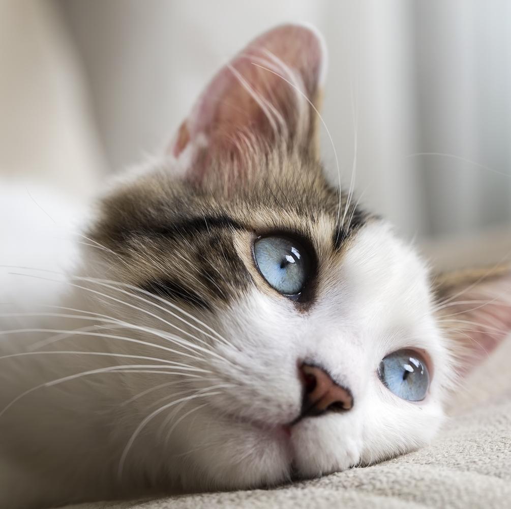 Ook  een oppas voor uw kat nodig?